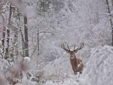 Wie WILD ziet, verlangt naar een tocht door de Veluwse bossen