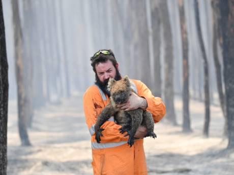 La facture salée des incendies en Australie