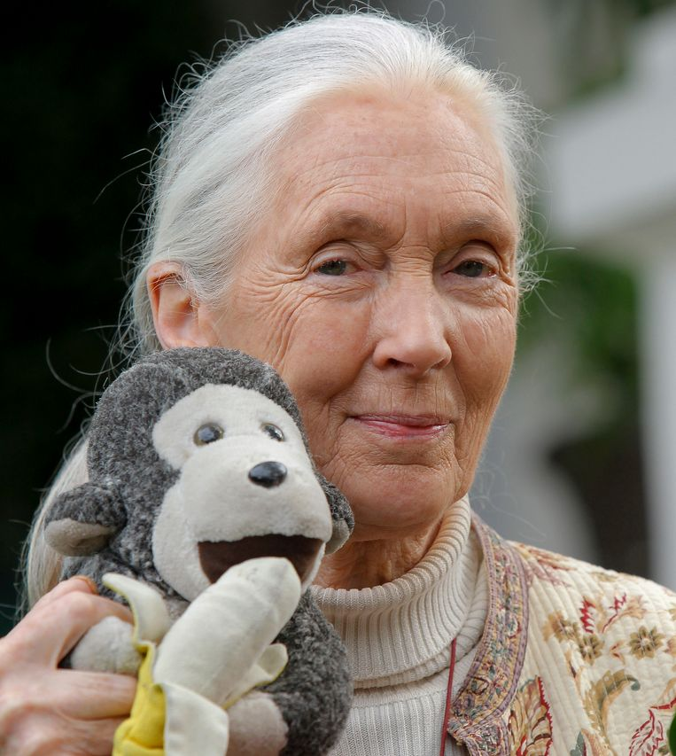 Chimpansee-experte Jane Goodall reist altijd met een knuffel van een aap.