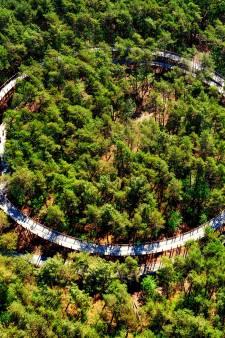 Fietsen door de bomen in Hechtel-Eksel (B) groot succes