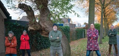 Rel om oude wilg in Wageningen: gemeente wil van bejaarde boom af, buurt is fel tegen