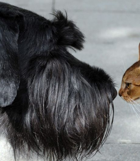 Forse groei bij dierenwinkels. Pets Place opent tweede vestiging in Breda