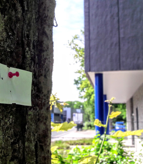 Geen kapvergunning afgegeven voor bomen Larenstein De Bilt