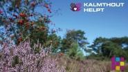 Gemeente lanceert platform 'Kalmthout helpt #samentegencorona'