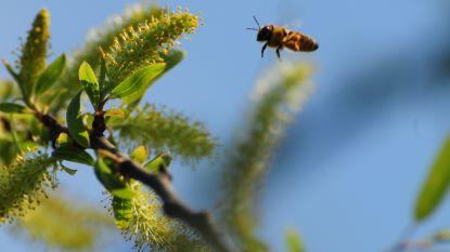 Slechte lente leidt tot catastrofale honingoogst in ons land
