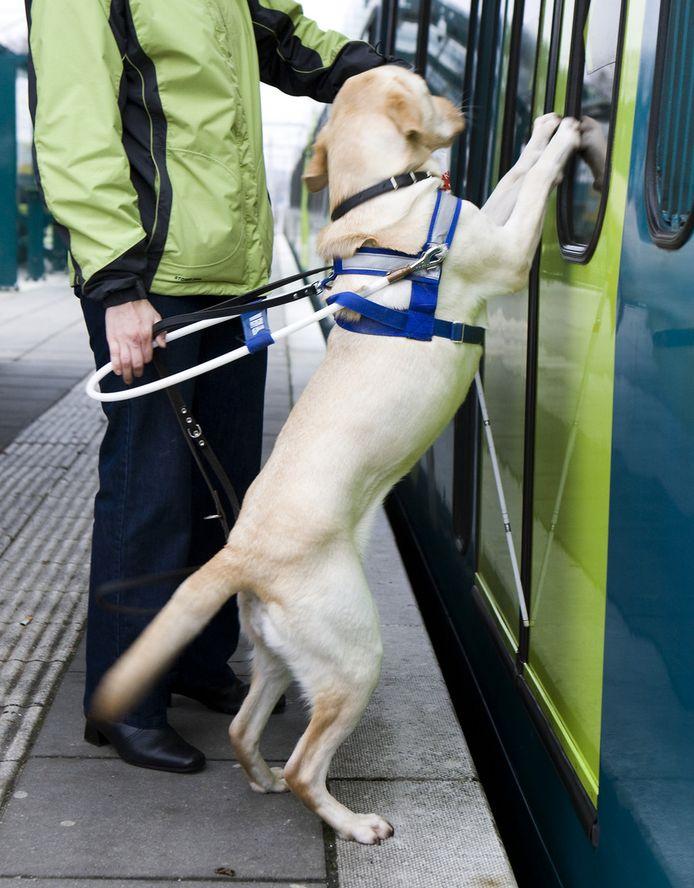 De blinde Suzanne van den Bercken met haar blindengeleidehond Delphy