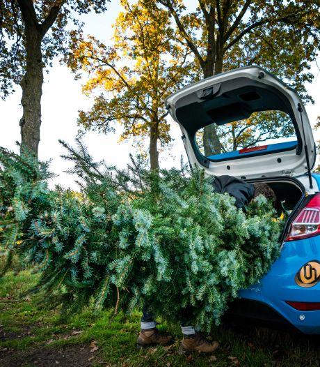 Kerstboom coronaproof in de achterbak bij Santa's Drive-In op Vasim-terrein