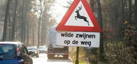 Zo moet het aantal wildaanrijdingen worden teruggedrongen op de N310 in Nunspeet