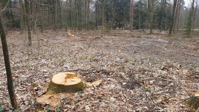 Milieuzorg fotografeerde vorig jaar de gevolgen van de illegale bomenkap door de gemeente, die daar een wadi wil aanleggen. Milieuzorg spreekt een vuilwaterpoel.