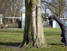 Adviescommissie moet monumentale bomen beschermen