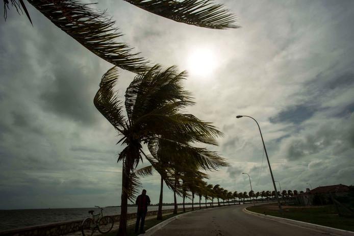 Palmbomen hebben het aan de Cubaanse kust flink te verduren.