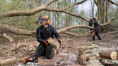 Leerlingen helpen domein d'Ursel opruimen na stormschade