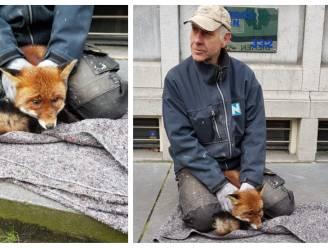 """Verdwaalde vos belandt in centrum van Amsterdam: """"Hij was vreselijk gestrest"""""""