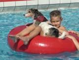 Met je hond naar het zwembad en van de springplank in Lopik