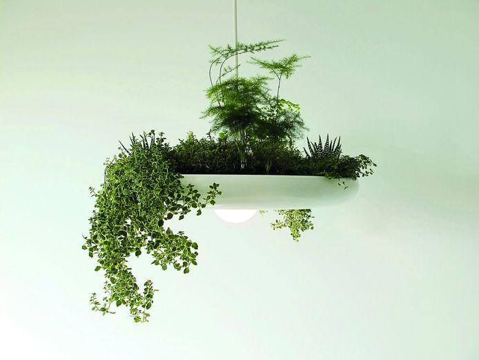 Mini tuintjes, groots effect