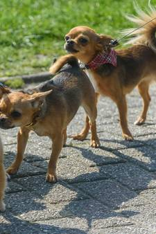 Honden strijden om titel 'mooiste van Twente' bij Woeferland in Oldenzaal