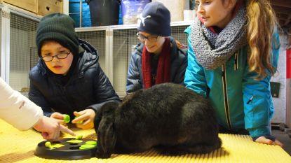 Studenten van Hogeschool Vives brengen kinderen in contact met zorgdieren van De Kleppe in Everbeek