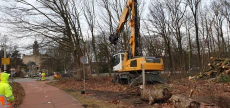 Buijtelaar veroordeelt sabotagepoging bij bomenkap voor rondweg: 'Dit gaat een stap te ver'