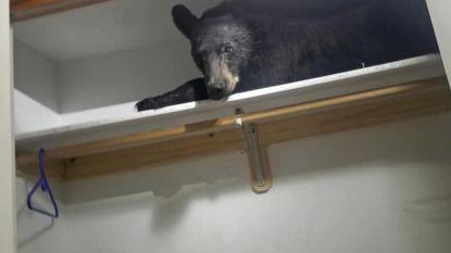 VIDEO. Bewoners vinden beer in kleerkast en die is niet onder de indruk