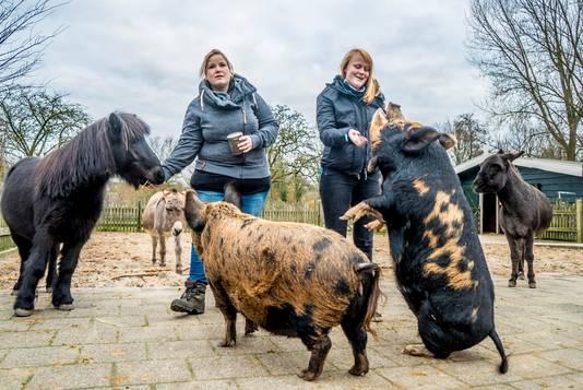 Anje de Boer (l.) voert pony Zorro, die na de dood van Rosa nu verblijft tussen de varkens en de ezels. Stagiaire Demi Vollmuller geeft een van de varkens iets te eten.