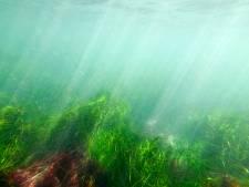Hoe zeewier kan helpen om de klimaatcrisis aan te pakken