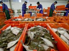 Visafslag op Urk beleeft topjaar met recordomzet: wel minder vis gevangen