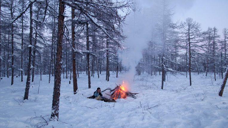 Een rendierherder in het taigagebied in Noord-Siberië. Bossen zouden hier de klimaatopwarming niet tegengaan. Beeld Hollandse Hoogte