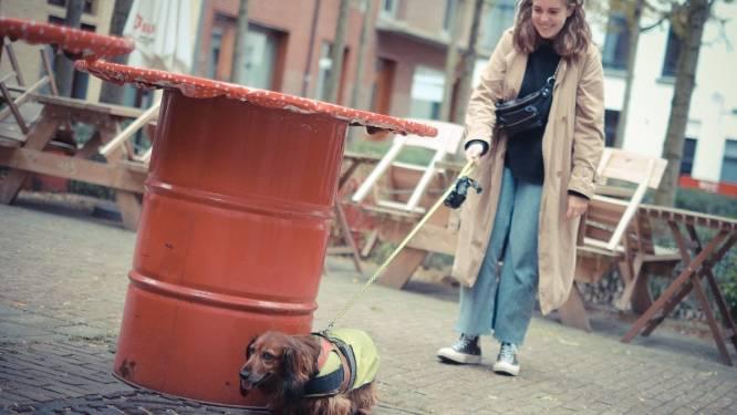 Coronazorgen vergeten? Ga eens op stap met een hond: hogeschool lanceert opvallende actie om eenzaamheid bij studenten te doorbreken