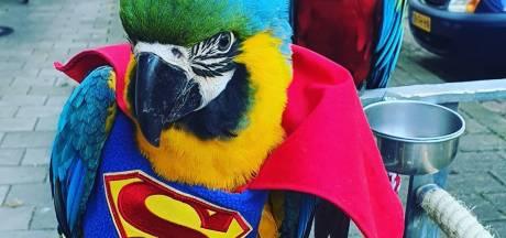 Egemen neemt zijn papegaaien overal mee naartoe: een feestje om te zien