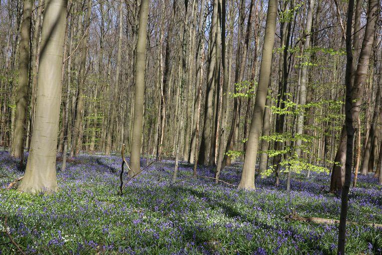 In de buurt van het Hallerbos gaat het OCMW enkele gronden verkopen. Het Agentschap voor Natuur en Bos is geïnteresseerd.