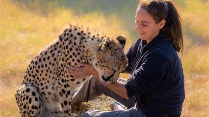 """Oostendse Kim (35) runt centrum met 100 wilde dieren in Zuid-Afrika: """"Eten vinden voor hen wordt steeds moeilijker"""""""