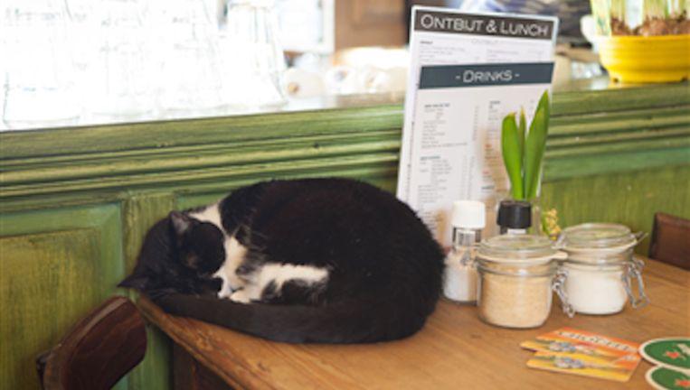 Smokey in karakteristieke houding in Café 't Loosje. Beeld Café 't Loosje
