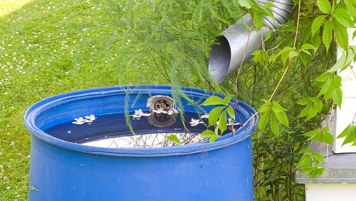 Een regenton is de meest gebruikte manier om regenwater apart op te vangen.