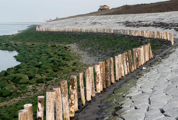 Langs een deel van de versterkte dijk bij Zierikzee werden een paar jaar geleden de perkoenpalen - een ouderwetse vorm van oeverbescherming - teruggeplaatst.