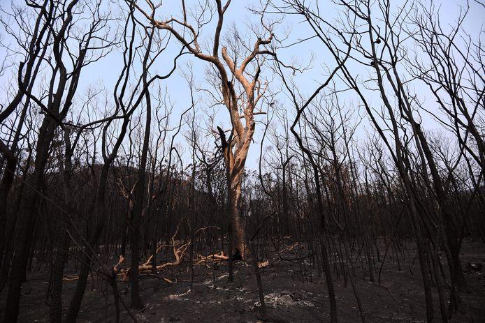 Verbrande bomen in in New South Wales, Australië. Het land beleefde in 2019 zijn droogste en warmste jaar ooit.