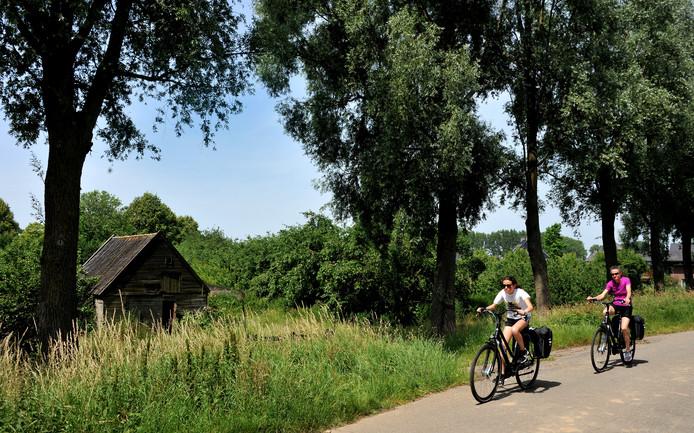 De boomgaard aan de Oudendijk oogt als een groene oase, maar volgens recent onderzoek zijn de meeste bomen ziek.