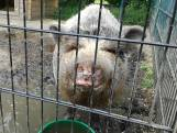 Knuffelen en aaien bij opendag zorgboerderij in Woensdrecht