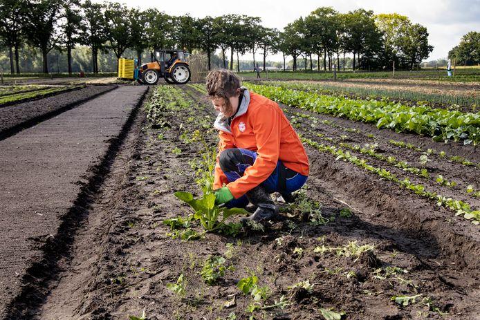 Herenboerderij De Groote Heide in Soerendonk.