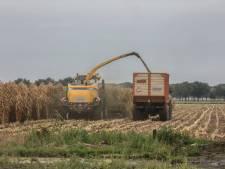 Maisoogst in Zuidoost-Brabant komt al vroeg op stoom