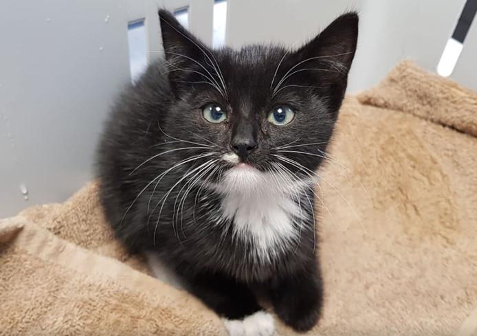 Kittens onder motorkap gehaald in Bergeijk