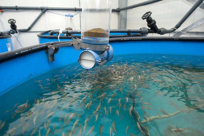 De bassins met subtropische vis.