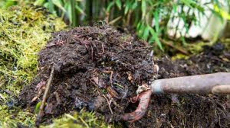 Deelnemers mogen een staal van grond of compost uit eigen tuin meebrengen.