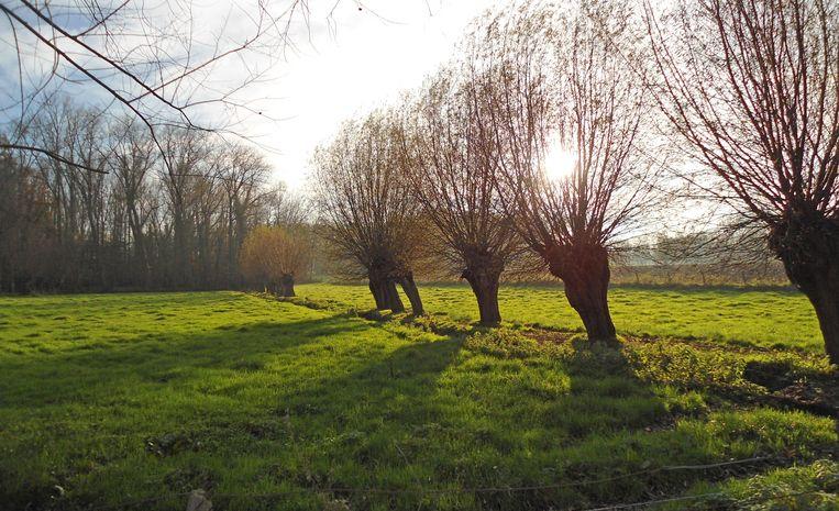 De Koudenbergbeekvallei telt 70 hectare natuurschoon.