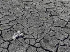 Bedrijven zetten bonus in om managers klimaatbewust te krijgen