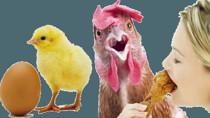 Doe-het-zelf-kip: fok je eigen vlees van ei tot slacht