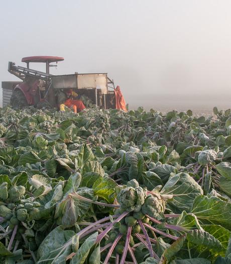 Boeren houden hart vast: regenschade of niet?