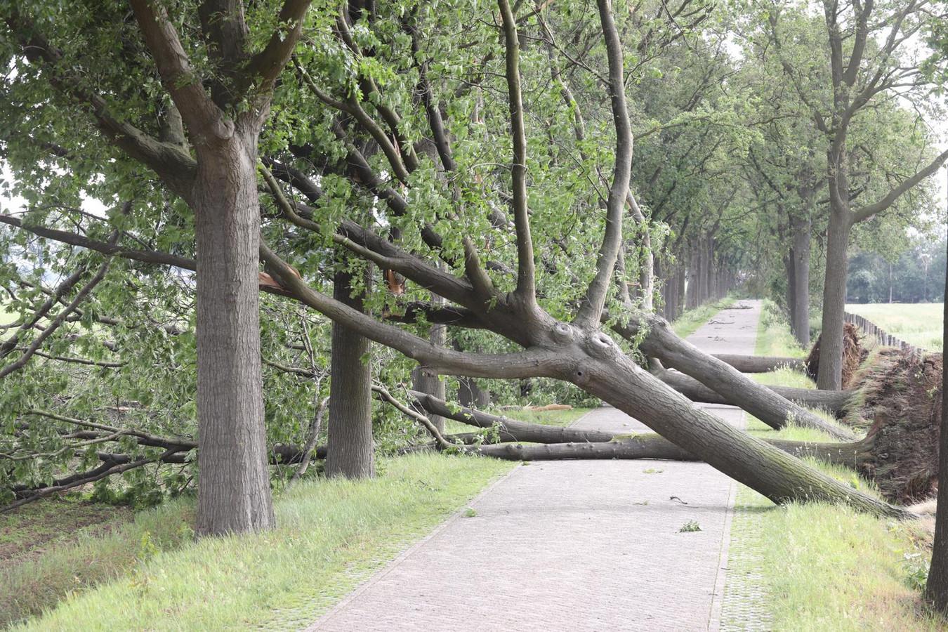 Bomen versperren de Kaweiseweg in Deurne na een korte maar hevige storm, gisterenavond