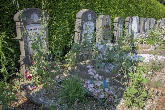 De oorlogsgraven van de gesneuvelde soldaten zijn volledig overwoekerd door onkruid.