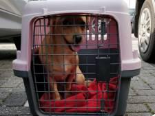 Hond gered uit warme auto in Hengelo, baasje 'witheet'
