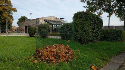 Gemeente plaatst bladkorven zodat inwoners stoep bladvrij kunnen houden